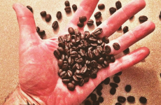 beachcomber-coffee-beans